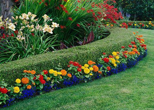 Fleurs vivaces pour une résidence d'été (95 photos): types et soins