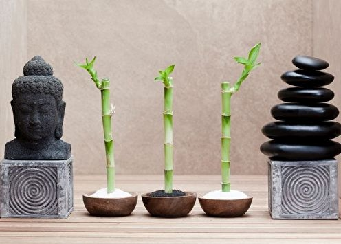 Bambou d'intérieur (80 photos): types et soins