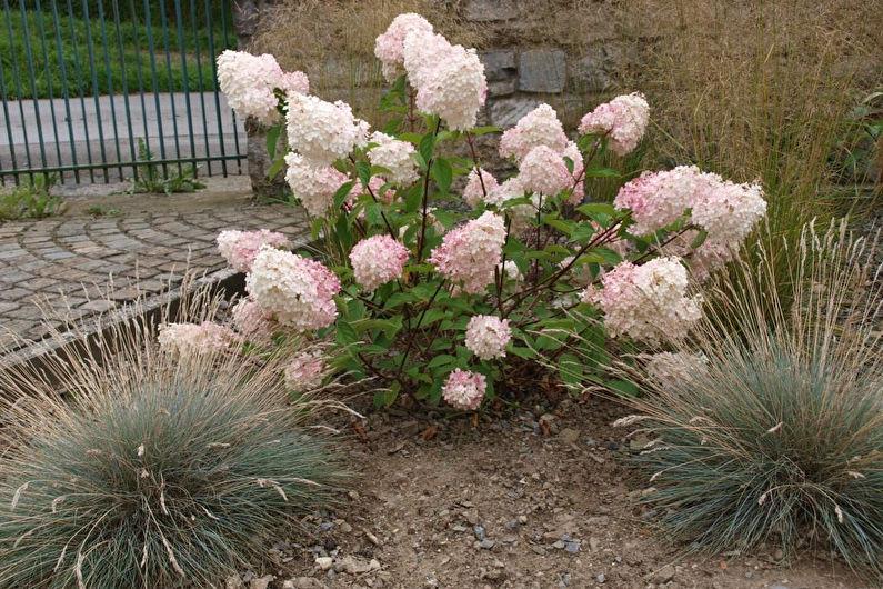 L'effet de l'acidité du sol sur la coloration des hortensias