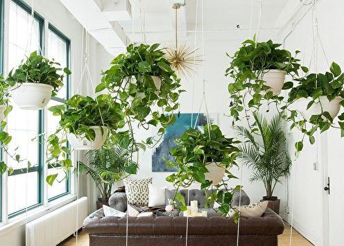 Plantes d'intérieur bouclées (75+ photos)